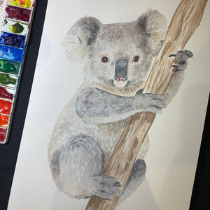 Baby Koala Fine Art Print of Original Watercolour Painting
