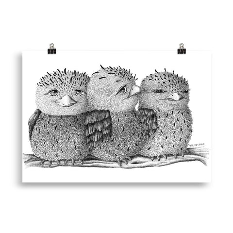 Tawny frogmouth print Claudine Dunn
