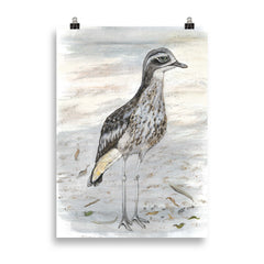Curlew by Tracy Church