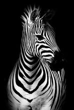 Lade das Bild in den Galerie-Viewer, Wild Tiere / Black and White - DIY Diamond Painting | Eckige Steine