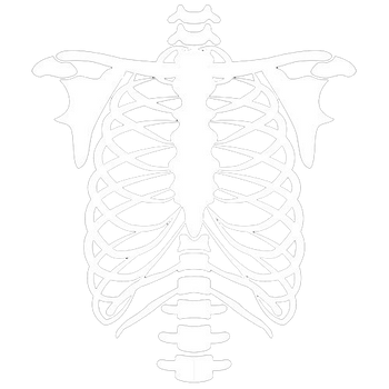 products/skeleton_torso.png