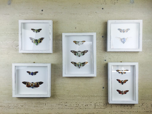 Folks, keep your home well jeweled with my framed cicada butterfly embellished in stones.