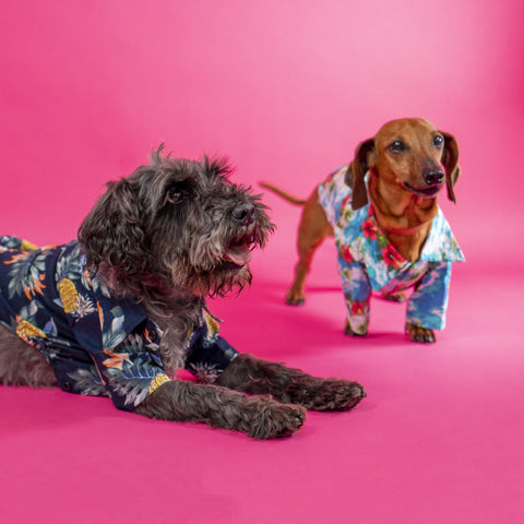 Hawaiian Dog Shirt