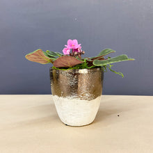 Load image into Gallery viewer, African Violet in a Ceramic Pot
