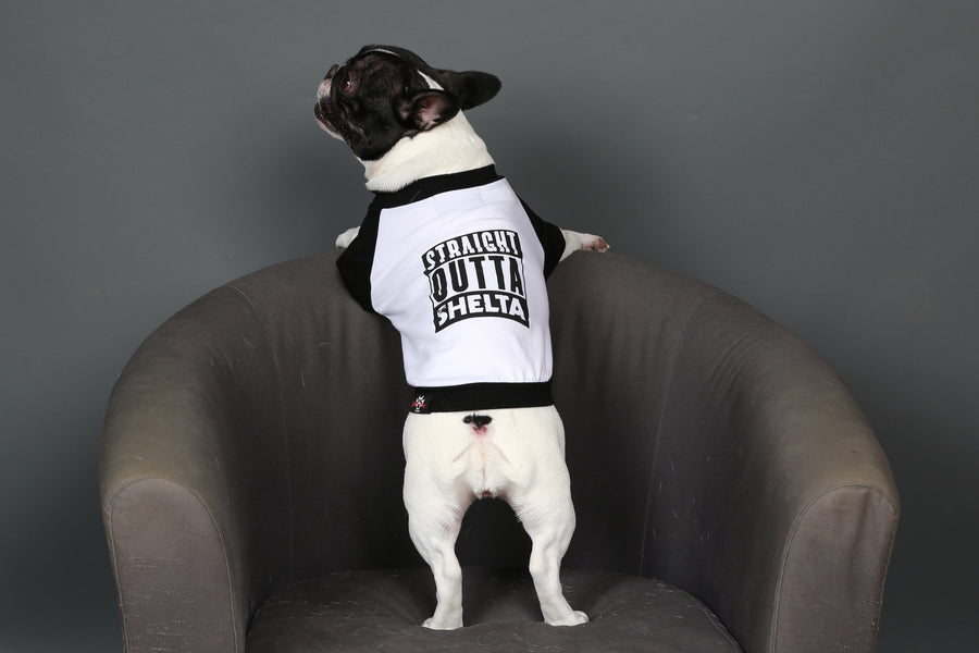 "French Bulldog ""Straight Outta Shelta"" Tee"