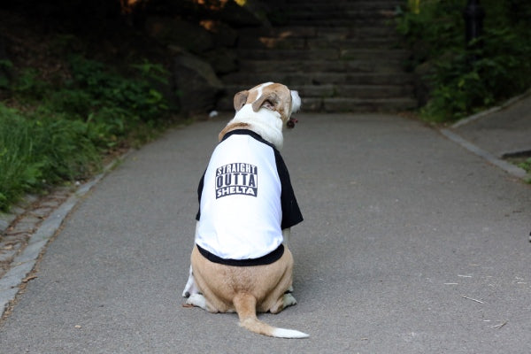 "Dog's ""Straight Outta Shelta"" Tee"