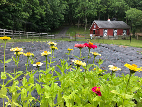 View of the Cultivating Dreams outdoor garden through colorful flowers