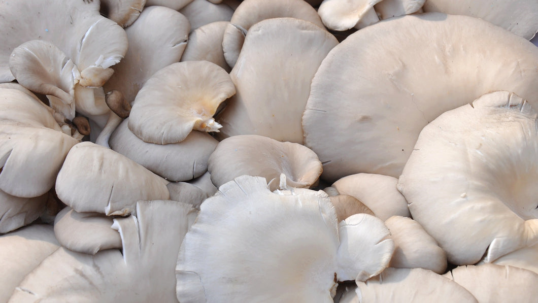 Oyster mushrooms punnet