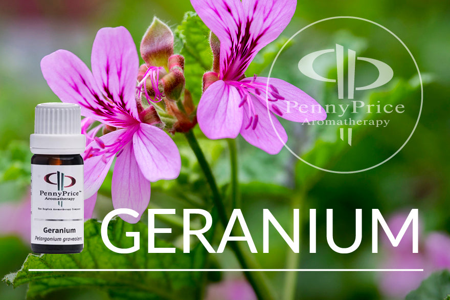 Oil of the Month: Geranium | The Cleansing Oil
