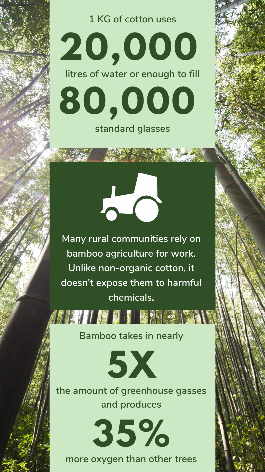 bamboo facts