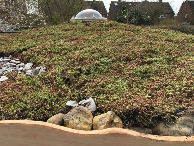 sedum-roof-shelter