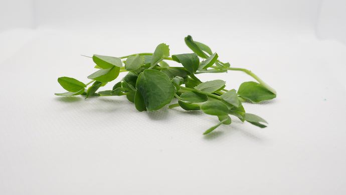Speckled Pea Microgreens