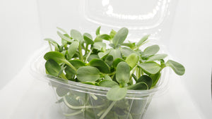 Clamshell packaging with sunflower microgreens bursting out.