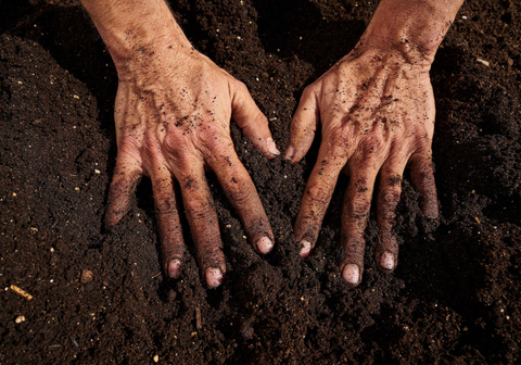 Dirty hands from gardening