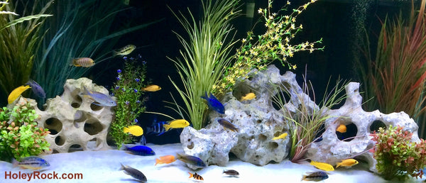 image of African cichlid tank