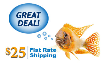 $25 Flat Rate Shipping for U.S. customers