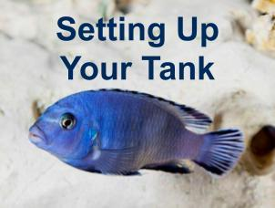 image of cichlid for fish tank setup page