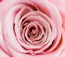 Load image into Gallery viewer, Pearl Pink Flower Box