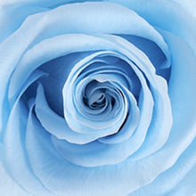 Load image into Gallery viewer, Blue Suede Flower Box