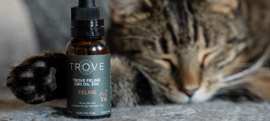 What is the best CBD dosage for Cats?