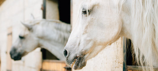 A PRIMER ON CBD FOR HORSES