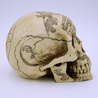 Spirit Board Natural Skull Sculpture - The Cranio Collections