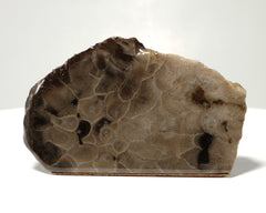Petoskey Stone Decorator