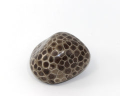 Polished Petoskey Stone #1