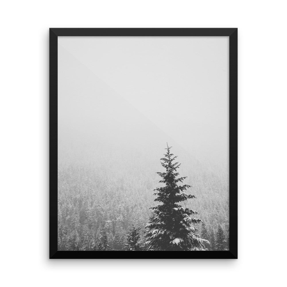 Frame print of a snow covered fir tree in the PNW