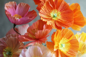 3 Amazing and colorful Handmade DIY Paper Flowers