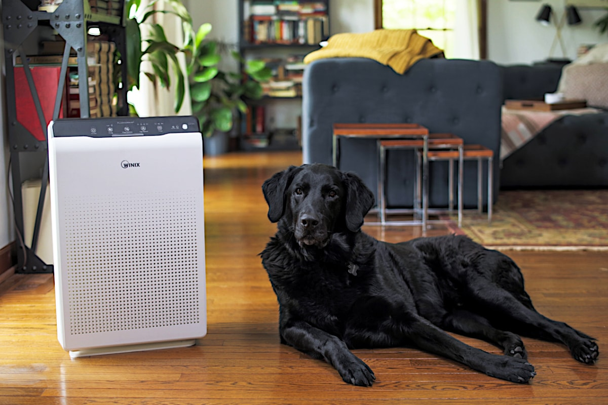 Winix Zero Room Air Purifier + Free Replacement Filter Pack In Living Room With Dog - Aerify