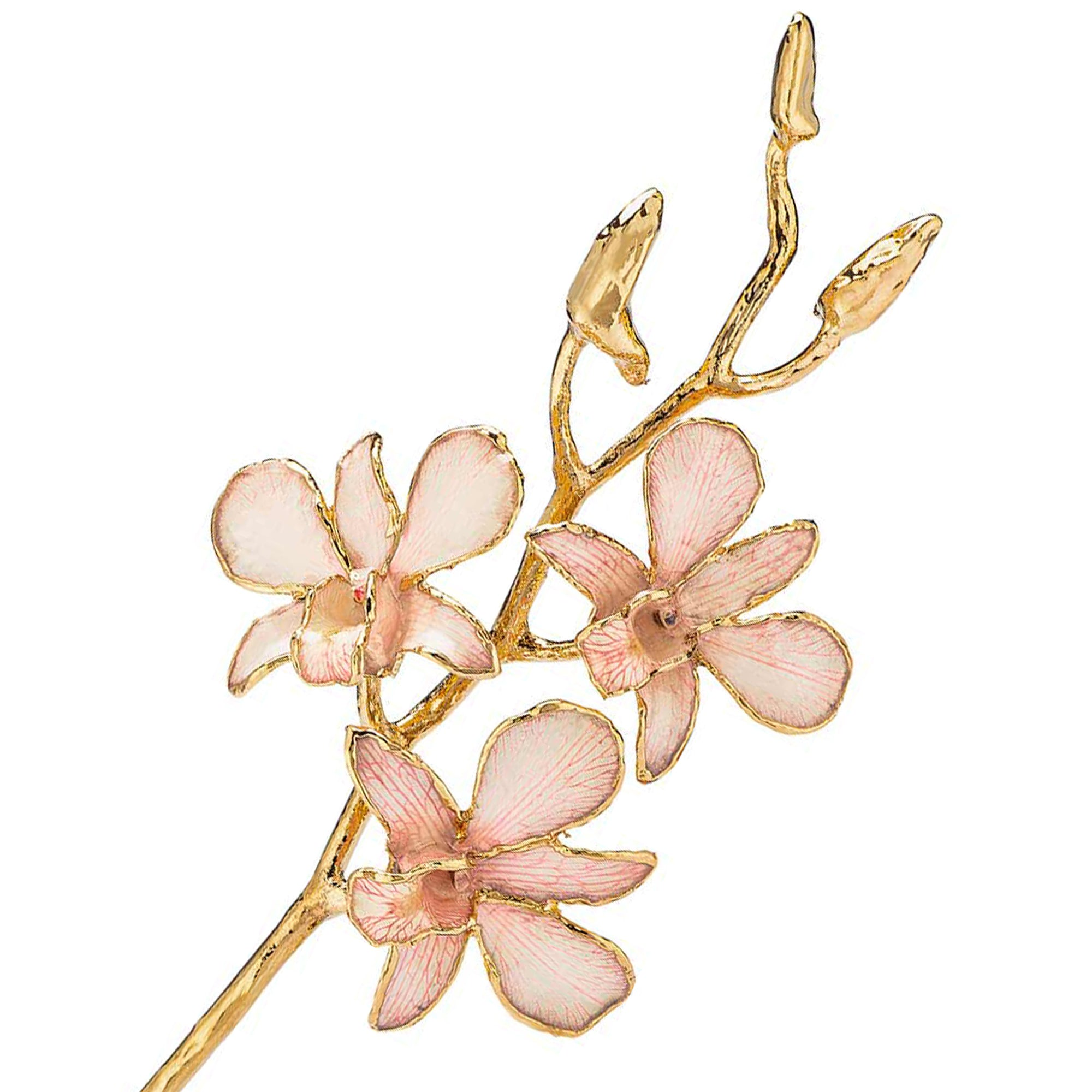 24K Gold Dipped Orchid in Pink Lace view of gold stem and flowers