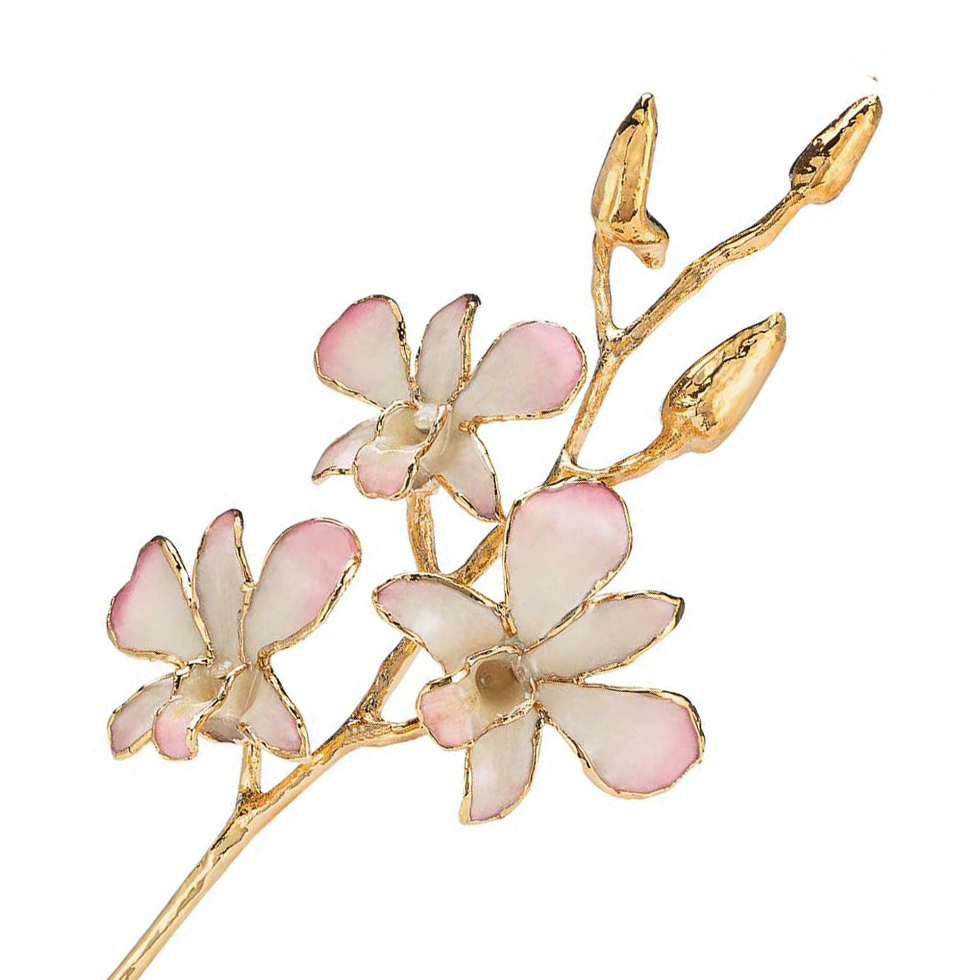 24K Gold Dipped Orchid in White to Pink view of gold stem and flowers