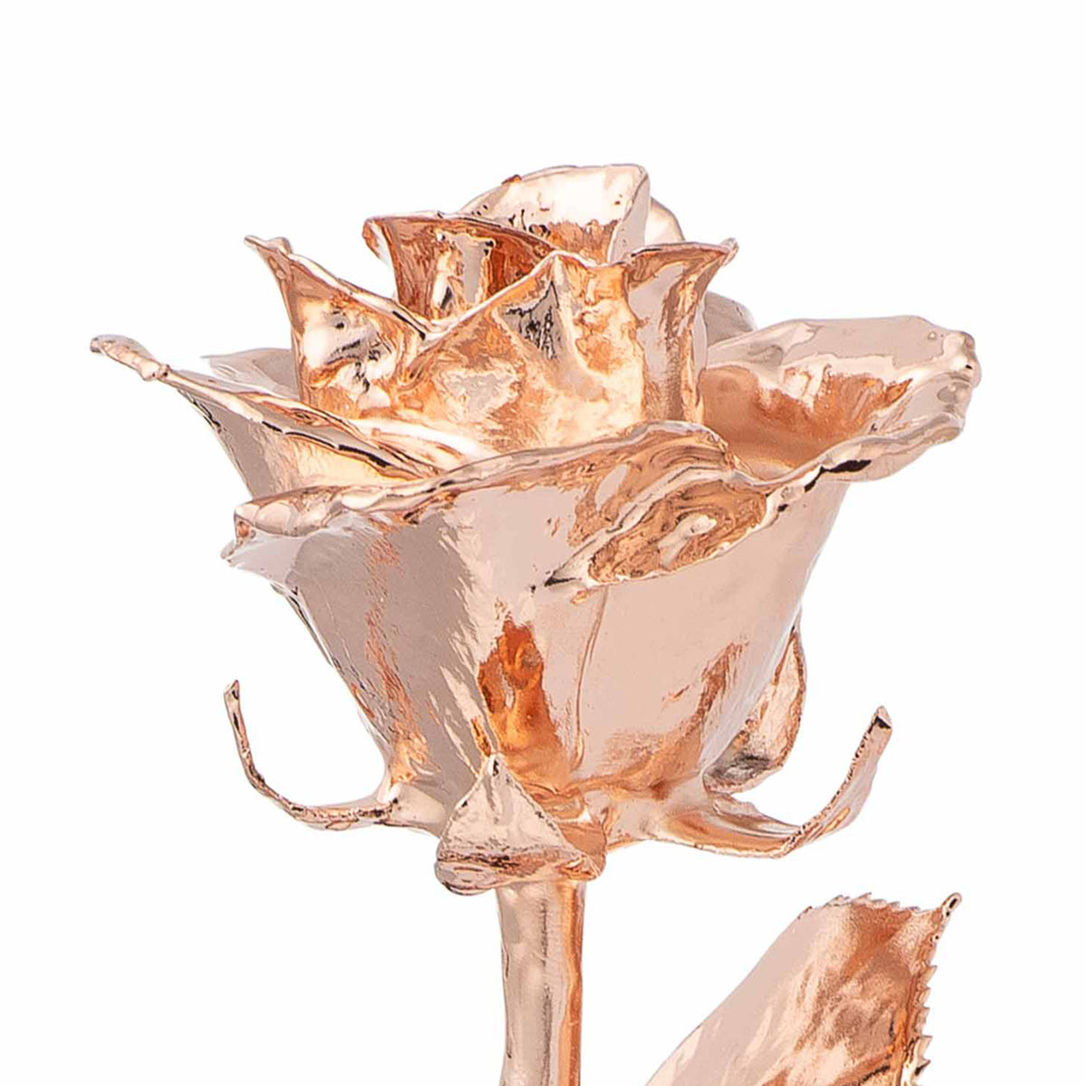 Rose Gold Dipped Roses: Combo Deal