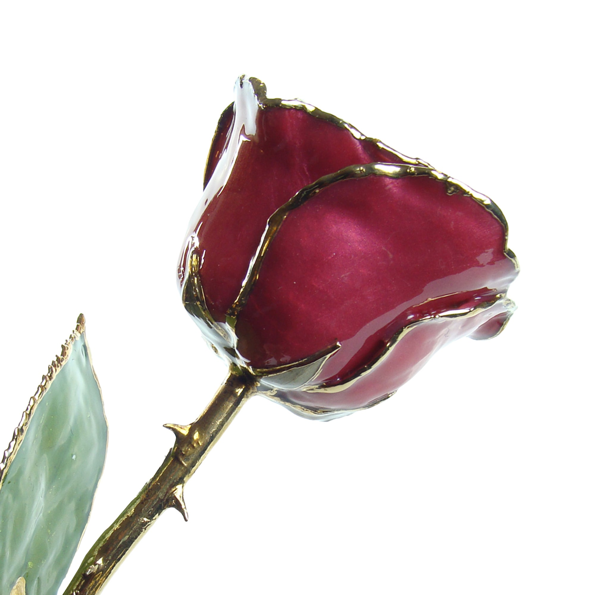 24K Gold Trimmed Forever Rose in Beating Hearts Color View of Stem, Leaves, and Rose Petals and Showing Detail of Gold Trim