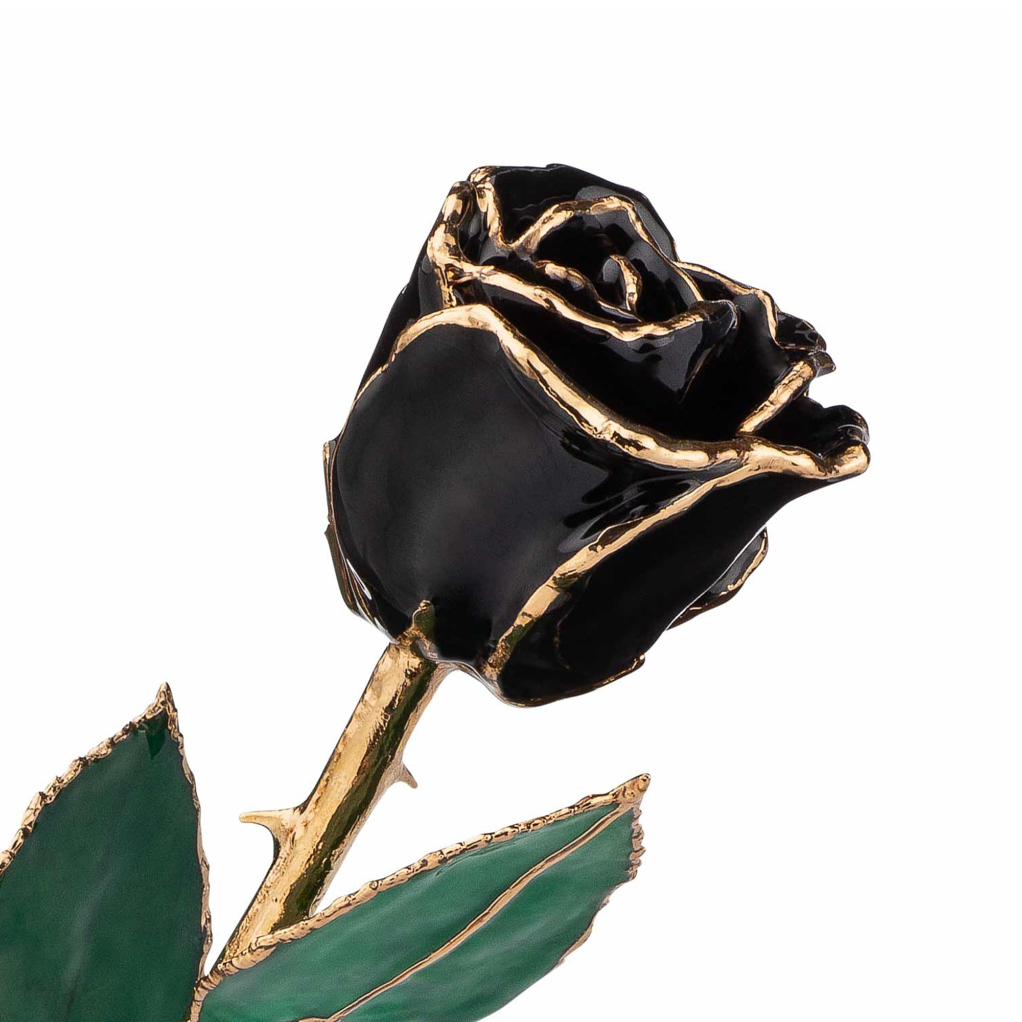 24K Gold Trimmed Forever Rose in Black Color with View of Stem, Leaves, and Rose Petals and Showing Detail of Gold Trim