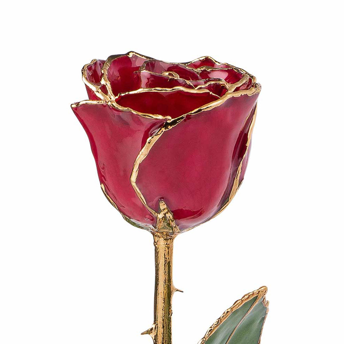 24K Gold Trimmed Forever Rose with Deep Red Burgundy Petals with View of Stem, Leaves, and Rose Petals and Showing Detail of Gold Trim Top View