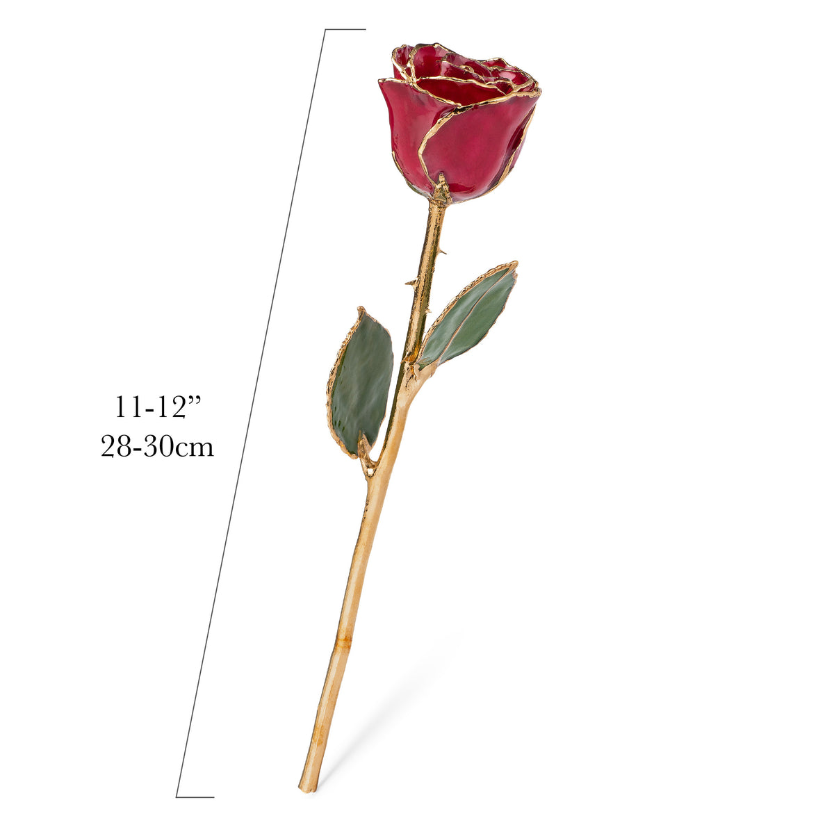 24K Gold Trimmed Forever Rose with Deep Red Burgundy Petals with View of Stem, Leaves, and Rose Petals and Showing Detail of Gold Trim