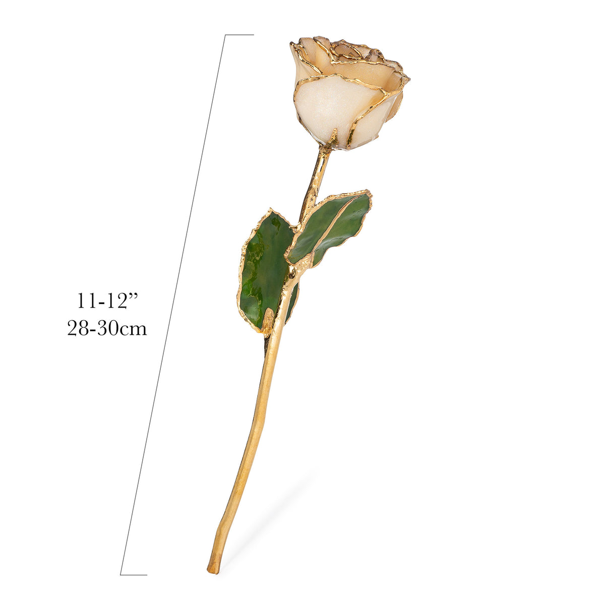 24K Gold Trimmed Forever Rose with Diamond Petals with Sparkles. View of Stem, Leaves, and Rose Petals and Showing Detail of Gold Trim showing measurements