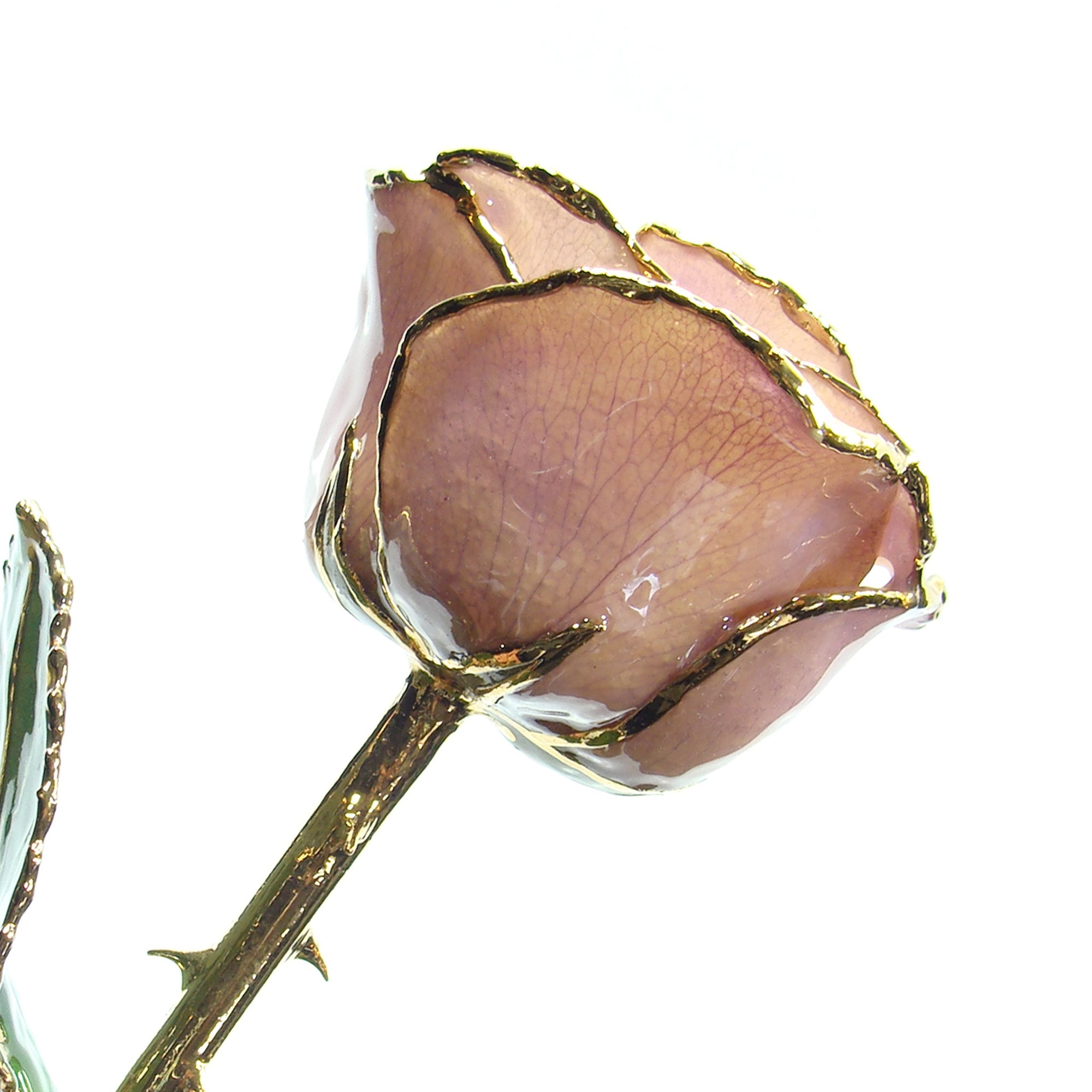 24K Gold Trimmed Forever Rose with Lavender Petals which are a light pink or purple color. View of Stem, Leaves, and Rose Petals and Showing Detail of Gold Trim