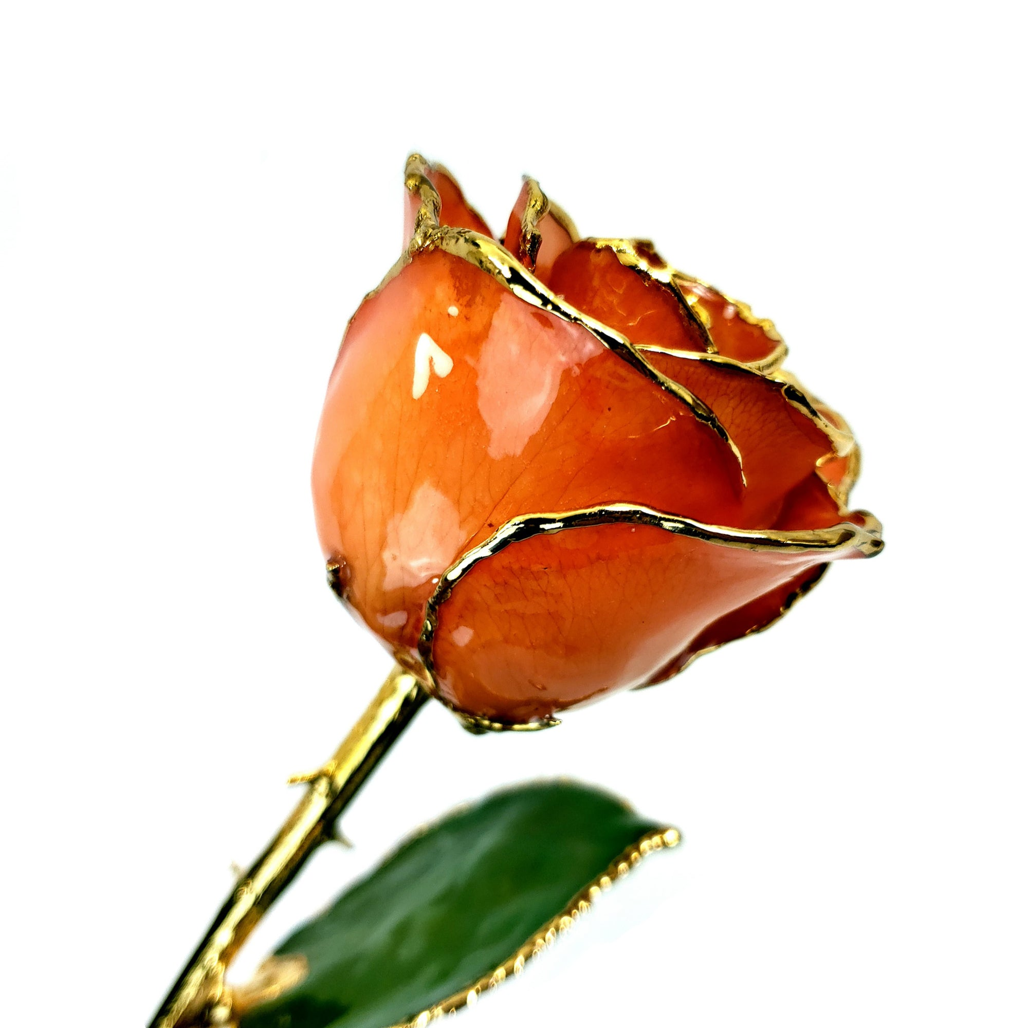 24K Gold Trimmed Forever Rose with Orange Petals. View of Stem, Leaves, and Rose Petals and Showing Detail of Gold Trim