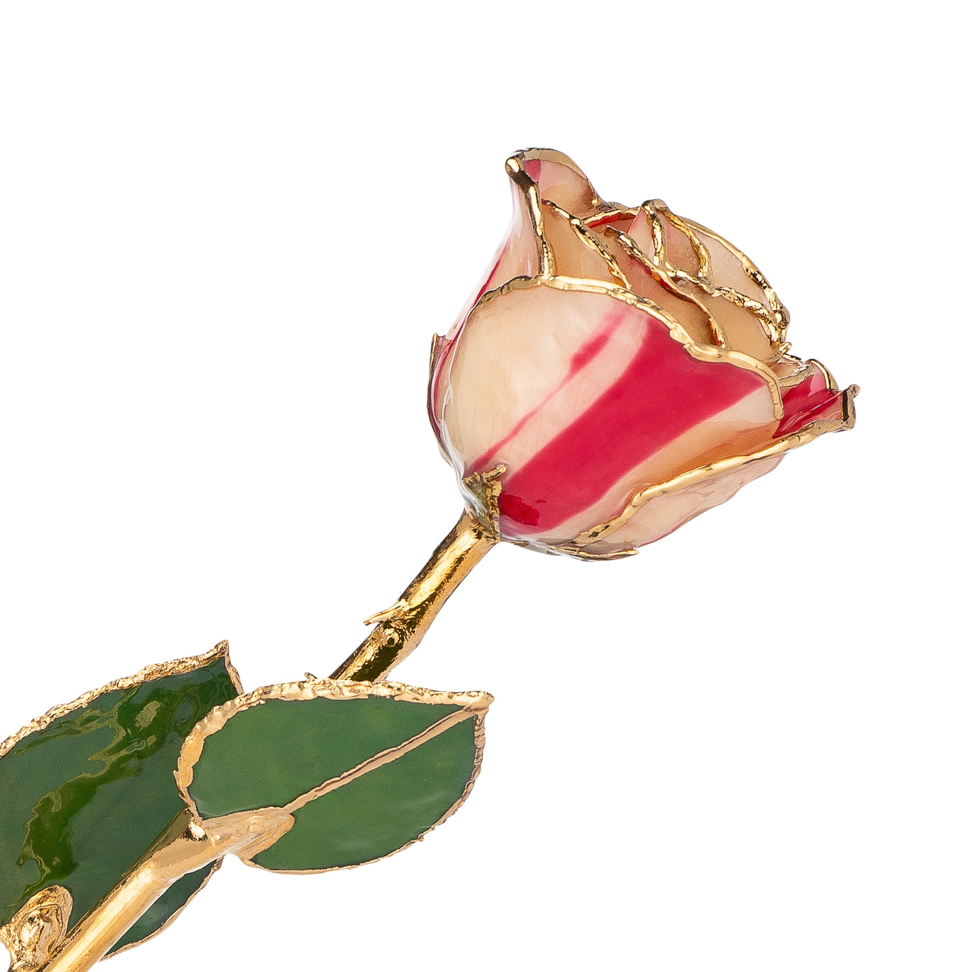 24K Gold Trimmed Forever Rose with Peppermint Striped Petals. View of Stem, Leaves, and Rose Petals and Showing Detail of Gold Trim