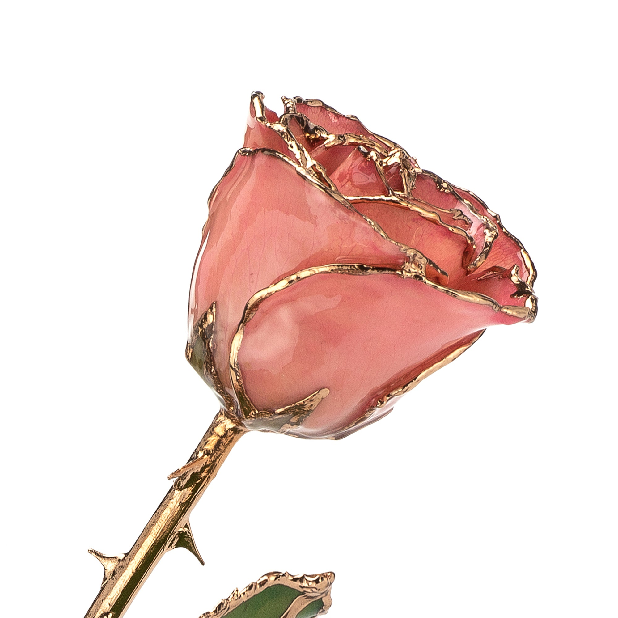 24K Gold Trimmed Forever Rose with Pink Petals. View of Stem, Leaves, and Rose Petals and Showing Detail of Gold Trim