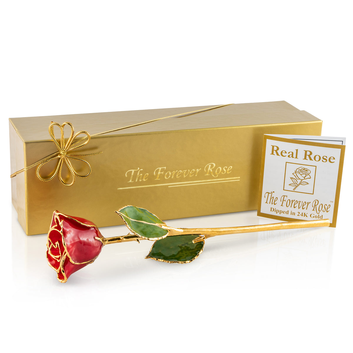 24K Gold Trimmed Forever Rose with Red Petals. View of Stem, Leaves, and Rose Petals and Showing Detail of Gold Trim Shown with Gold Gift box and certificate of authenticity