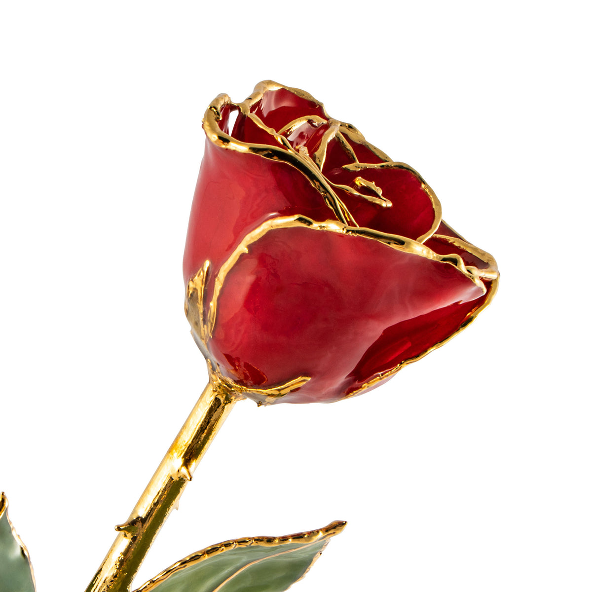 24K Gold Trimmed Forever Rose with Red Petals. View of Stem, Leaves, and Rose Petals and Showing Detail of Gold Trim