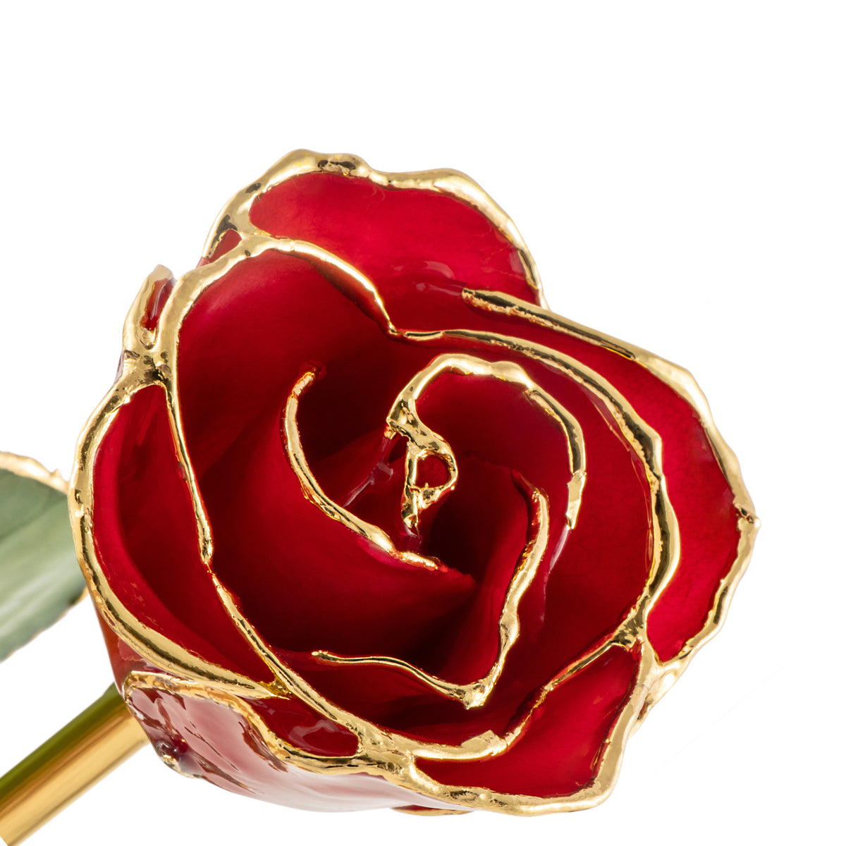 24K Gold Trimmed Forever Rose with Red Petals. View of Stem, Leaves, and Rose Petals and Showing Detail of Gold Trim oblique view looking down into bloom