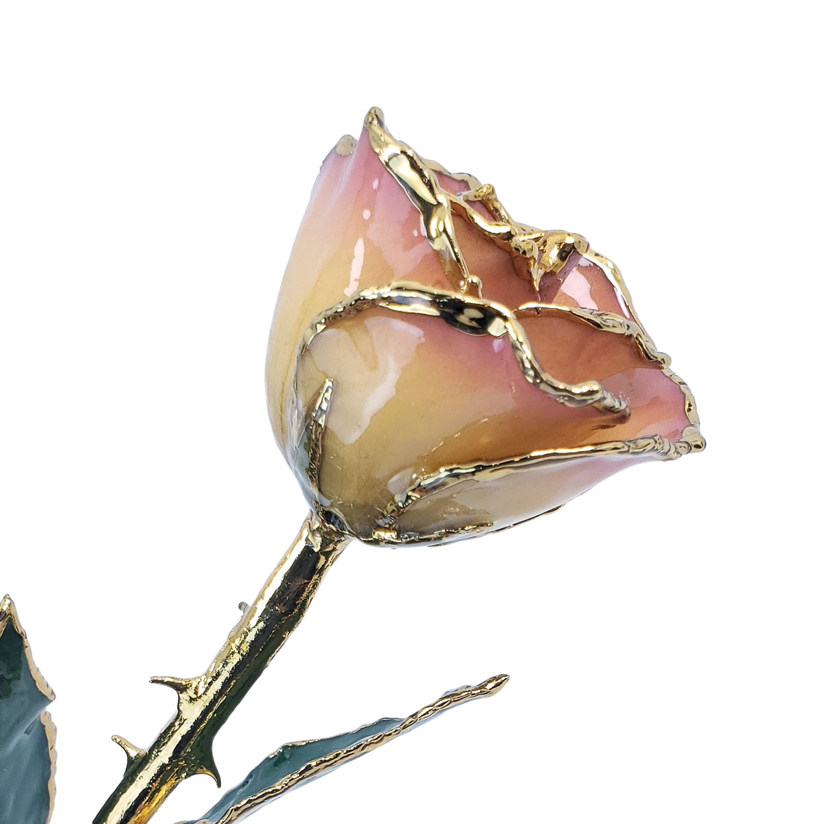 24K Gold Forever Rose - White to Pink