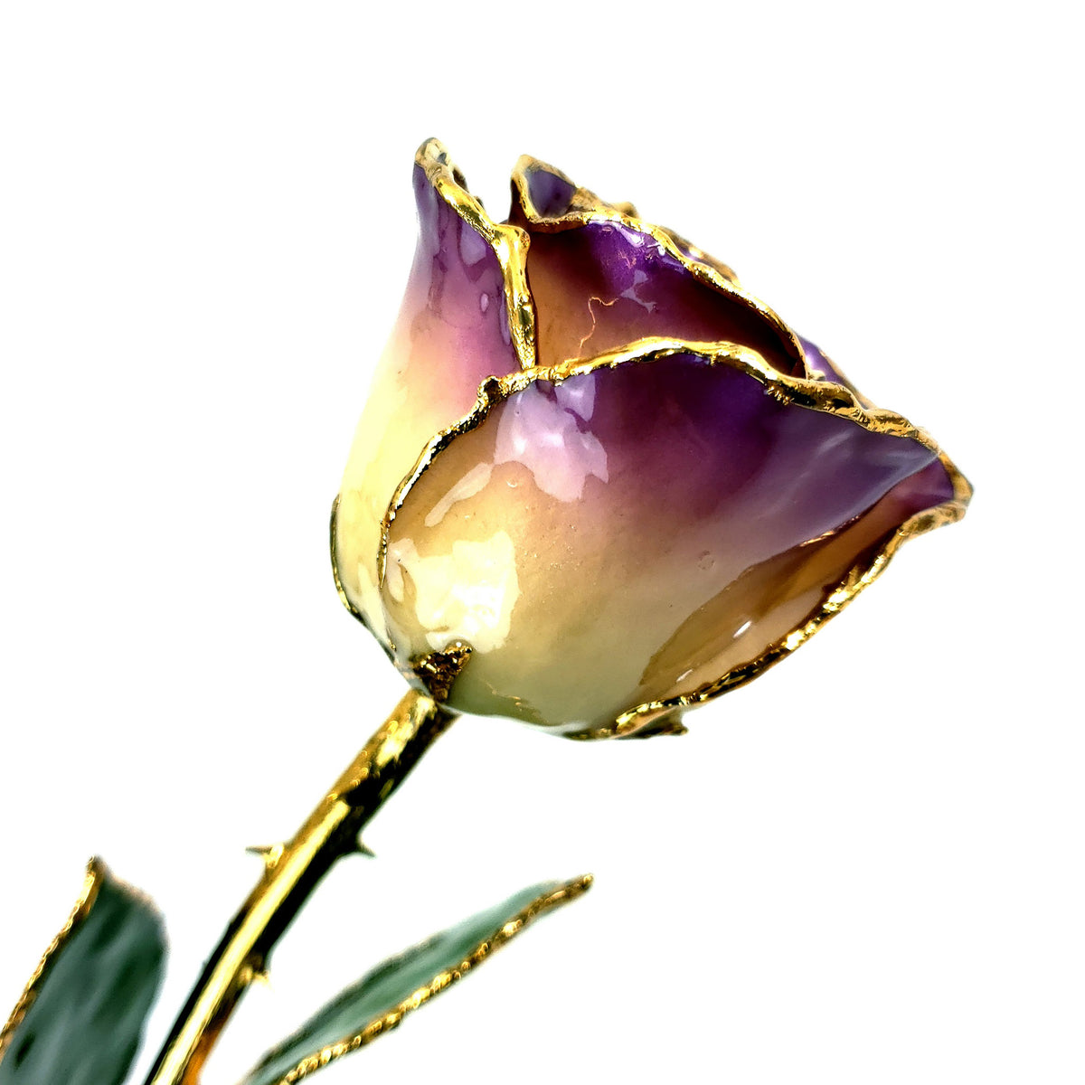 24K Gold Forever Rose - White to Purple