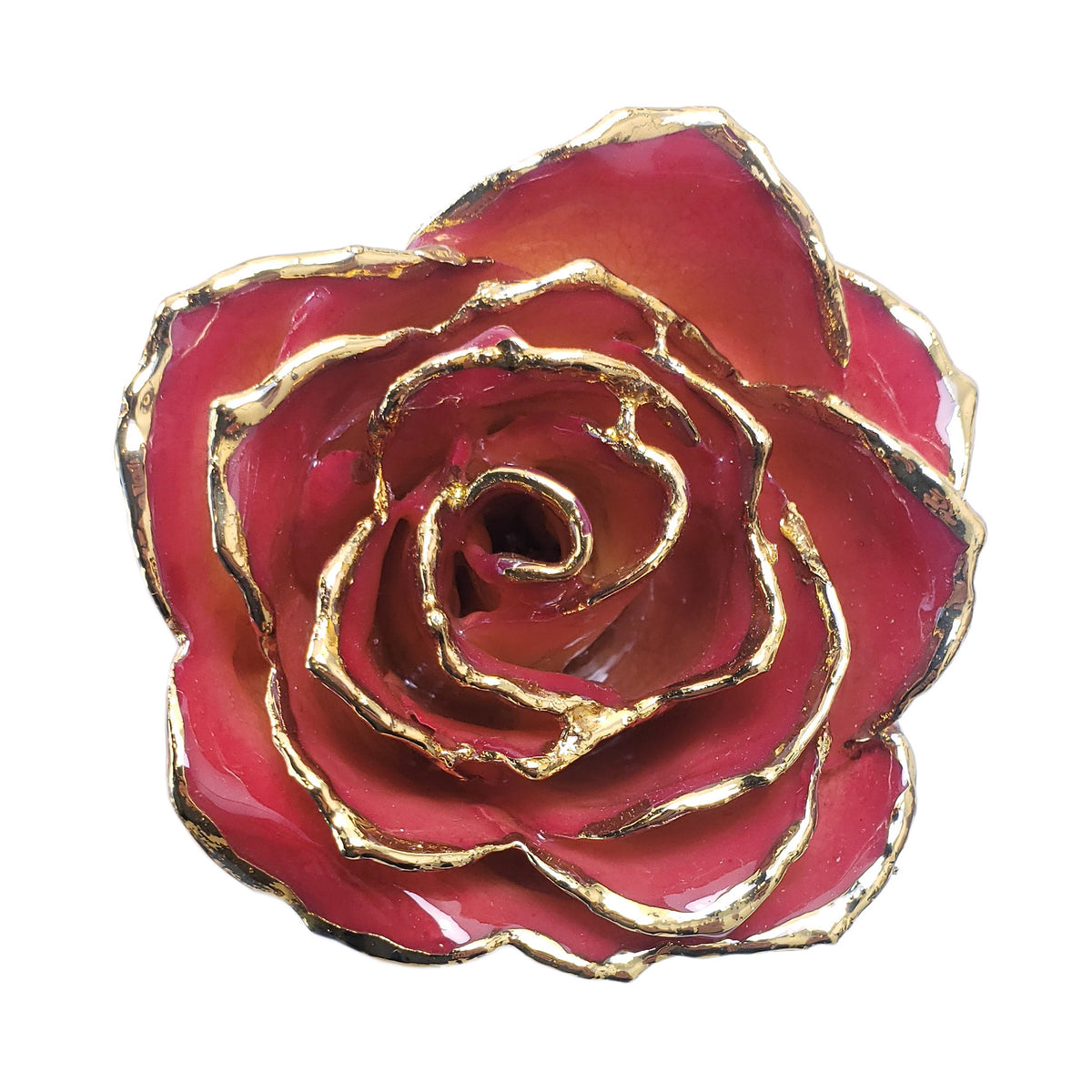 24K Gold Forever Rose - White to Red