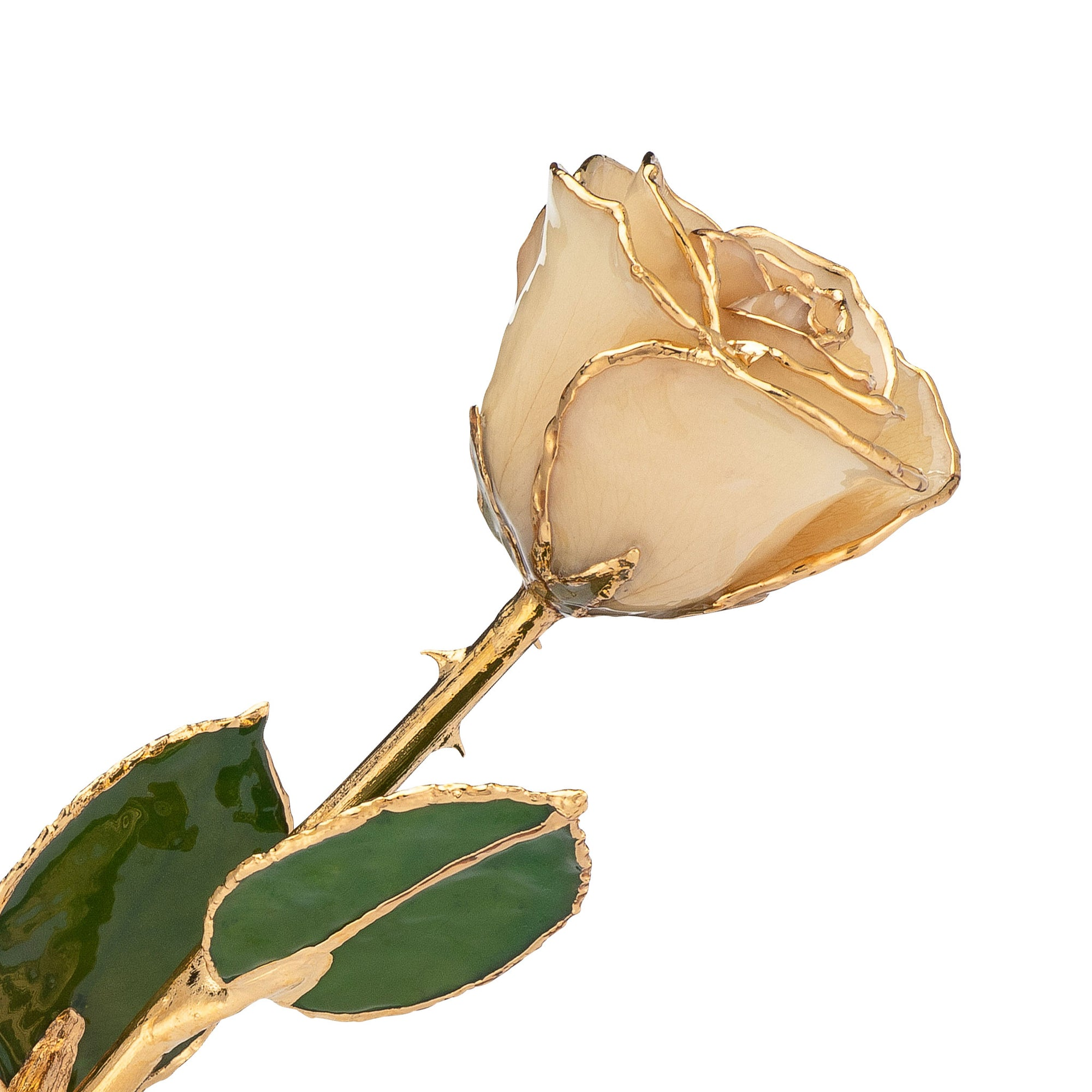 24K Gold Trimmed Forever Rose with White Petals.  View of Stem, Leaves, and Rose Petals and Showing Detail of Gold Trim